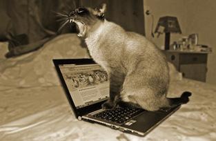 猫背姿勢による、腰への負担