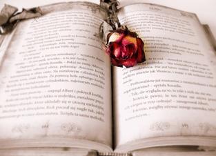 開かれた古い本に枯れたバラの花